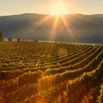 ex nihilo wedding venue - okanagan wedding venues, best okanagan vineyard wedding locations