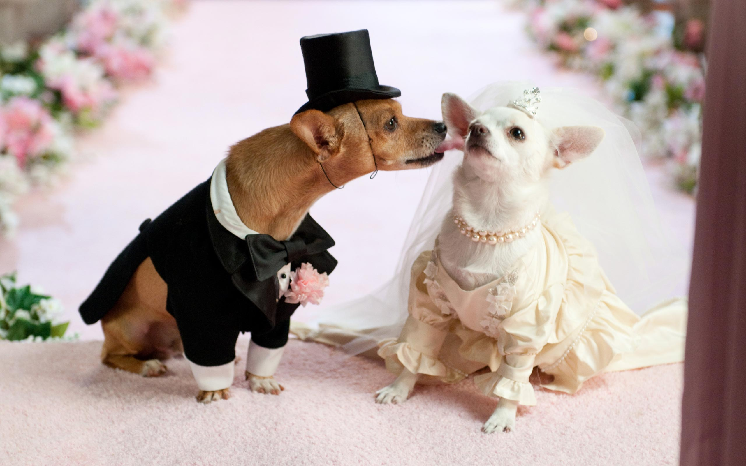 15 Delightful Pet Wedding Photos - Fancy Cats | Guff